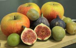 fruits-octobre.jpg